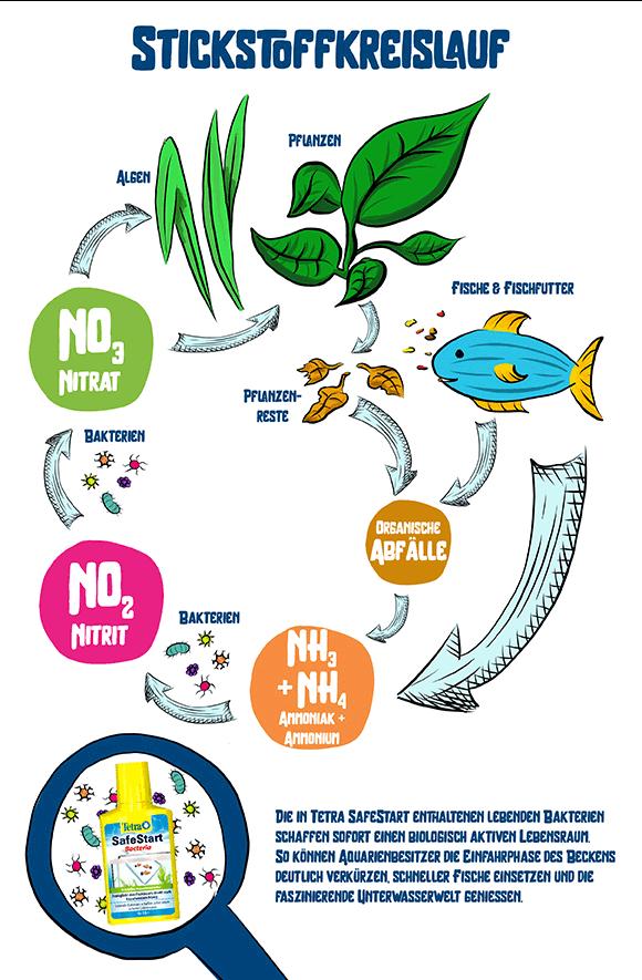 Infografik Stickstoffkreislauf