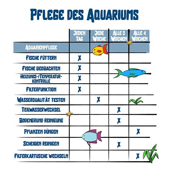 Pflege des Aquariums